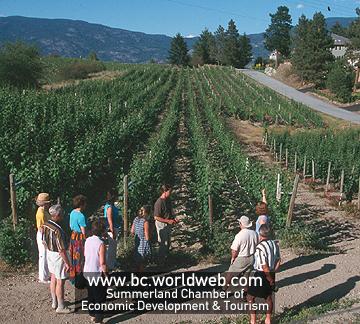 Worldweb Com Photo Summerland Winery Amp Vineyard Tour